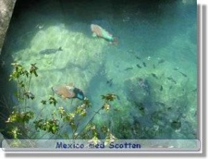 Mexico Xel-Ha 2004, Globetrottern
